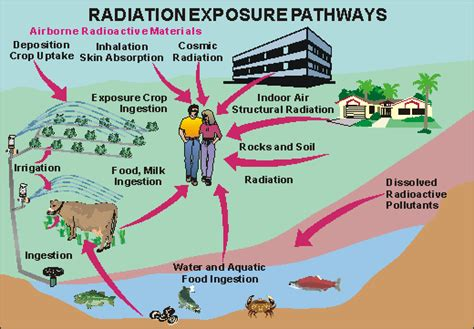 How To Detox From Nuclear Radiation by Nuclear Radiation Nuclear Radiation Exposure