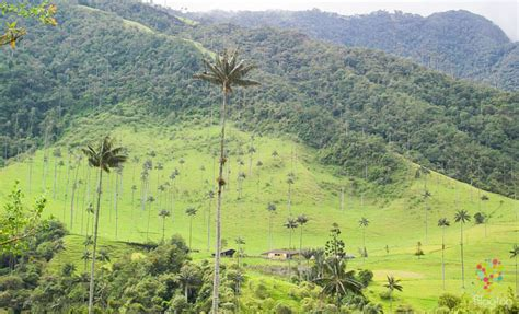 entrada valle del cocora valle del cocora en salento colombia al natural