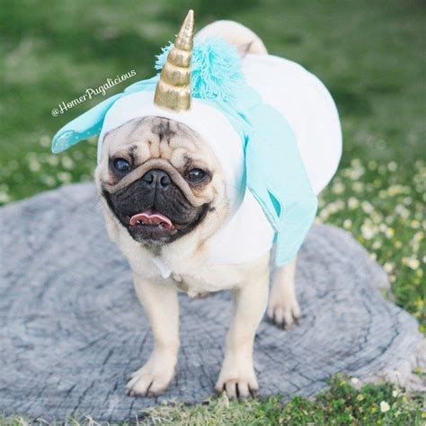 pug in unicorn costume best 25 pug costumes ideas on pug costume pugs and pugs