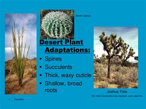succulents plants adaptations for kids biome presentation