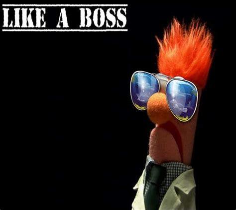 Beaker Meme - 17 best images about like a boss on pinterest the box