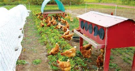 cara membuat kaldu ayam yang baik cara memberi pakan ayam kung yang baik dan benar doc