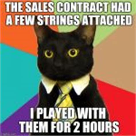 Business Cat Meme Generator - business cat meme generator imgflip