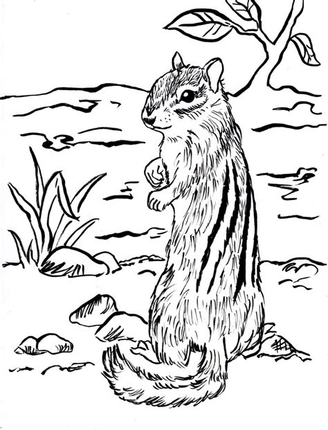 chipmunk coloring pages    print