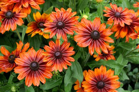 Flowers Of Garden File Garden Of Flowers 5982172940 Jpg