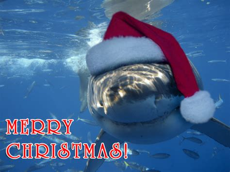 newest kid fish for christmas shark a voice for the voiceless merry fishmas merry year in review