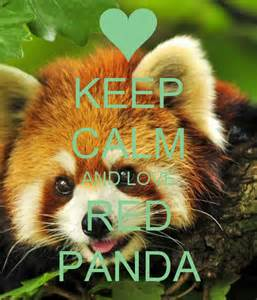 Panda Wall Stickers keep calm and love red panda keep calm and carry on