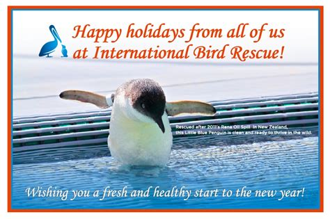 international bird rescue every bird matters 187 2011