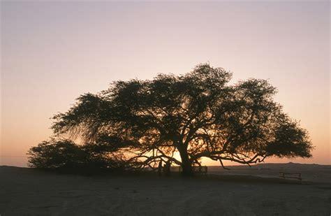 vanity l albero della vita di kurshuni i luoghi mito vanityfair it