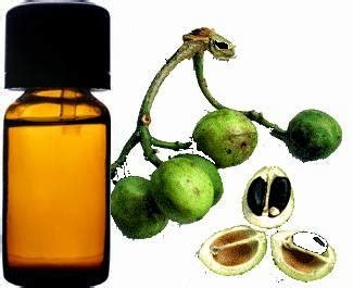 Minyak Jarak dr oz tips cara bersihkan wajah dengan minyak jarak dr oz indonesia