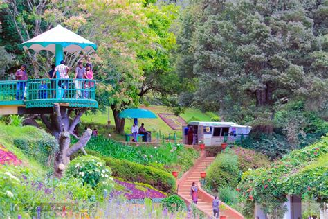 A Visit To The Ooty Gardens Voyage 361 A Visit To A Botanical Garden