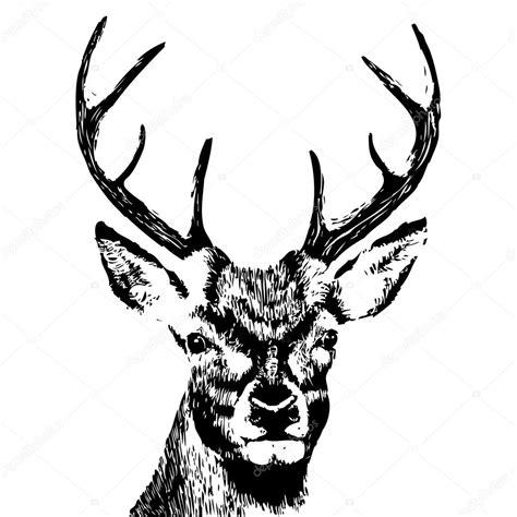 hand drawn deer head stock vector 169 goldenshrimp 76025661