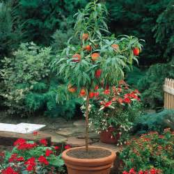 12 fast growing vegetables and fruit trees for your home garden the self sufficient living