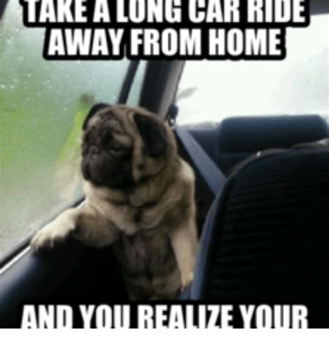 Dog In Car Meme - 25 best memes about take ball and go home take ball and