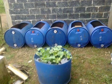 Bibit Belut Di Pekanbaru 6 langkah budidaya belut di kolam drum praktis dan mudah