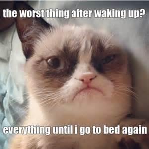 Grumpy Cat Good Morning Meme - image 436646 grumpy cat know your meme