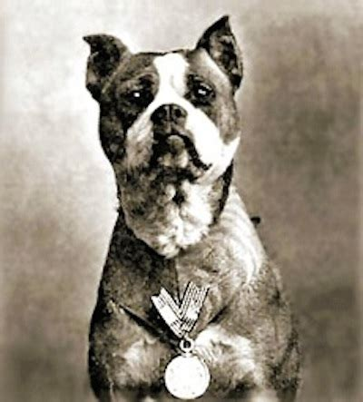 Sergeant Stubby German Stray Sergeant Stubby Became America S And Most Decorated War