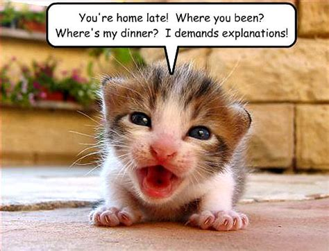 funny animal pictures funny and cute animal funny stuff