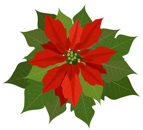 poinsettia image cliparts co