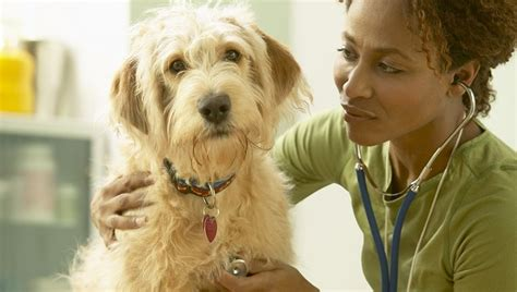 enalapril for dogs enalapril for dogs uses dosage side effects dogtime
