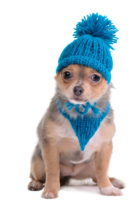 puppy cold winter check up a h heating and air conditioning inc 770 335 7832