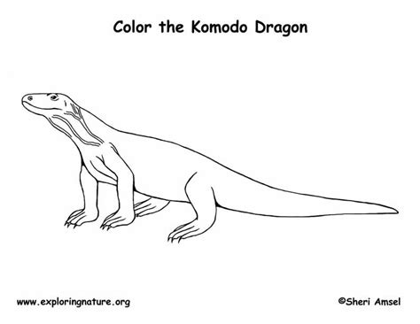 coloring pages of komodo dragon komodo dragon coloring page