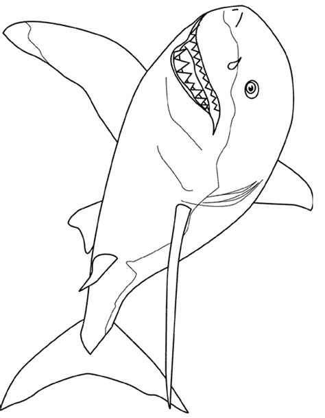 sand shark coloring page free coloring pages of tiger shark