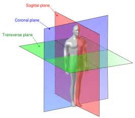 differences between sagittal frontal and transverse planes