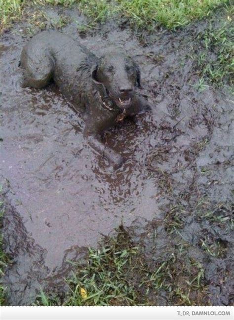 mud puppies mud puppies lol now that is