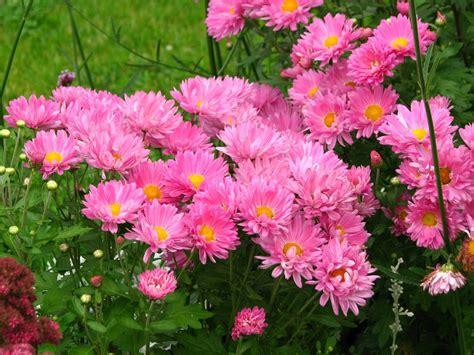 flores de jardin 50 esp 233 cies de flores para o seu jardim ficar colorido