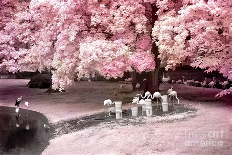 Cotton Tree Towel Animal Pink surreal pink flamingo pond infrared nature