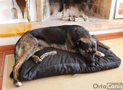 colchon perro 191 cu 225 l es la mejor cama para tu perro nuevas ideas para
