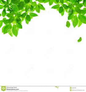 green leaf border design stock photos image 36334363