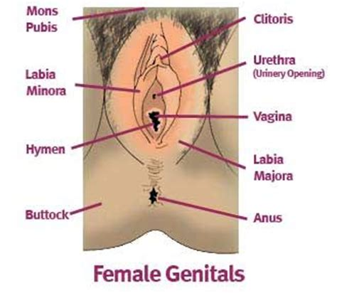diagram hymen cutaneous lip diagram an image of