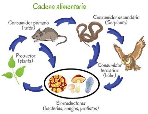 cadena alimenticia unam biol 243 gica portal acad 233 mico del cch