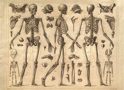 vintage diagram vintage anatomy skeleton diagram i like