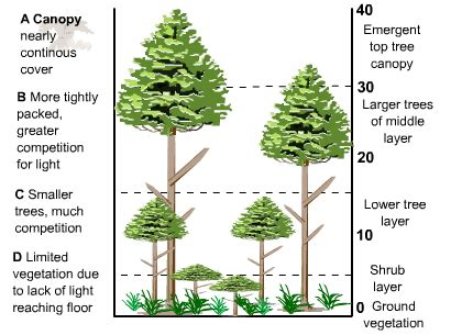 the tropical rainforest | s cool, the revision website