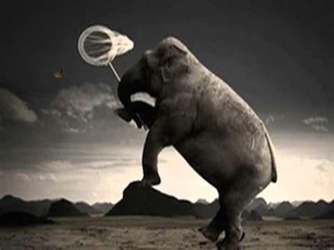 l alfabeto degli amanti testo l elefante e la farfalla michele zarrillo doovi