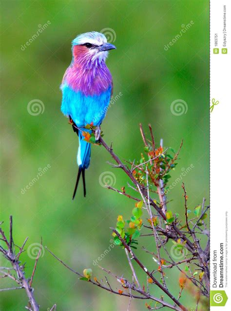 wild song bird stock image image 1863751