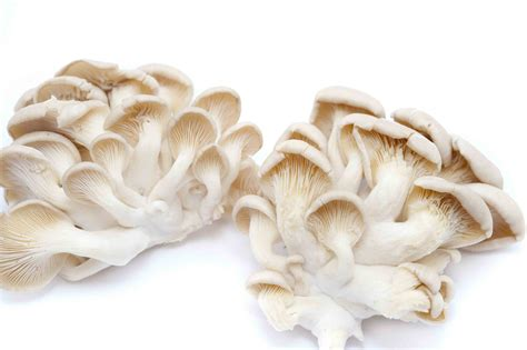 Oyster Health some fantastic health benefits of oyster mushrooms for better living