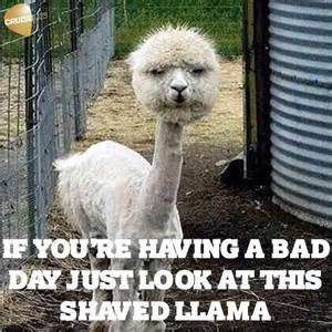 Bad Day Pictures A Bad Day Lol Your Daily Chuckle