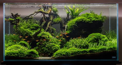 substrate aquascape substrate less planted tank apsa