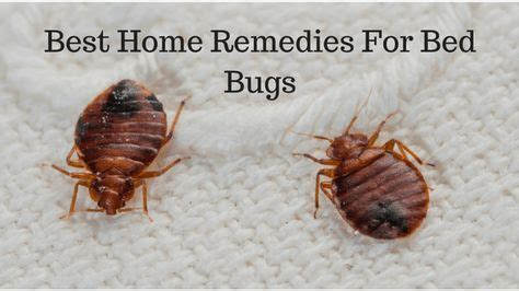 can bed bugs jump 25 best ideas about bed bug trap on pinterest bed bugs