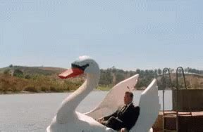 swan boats gif mood gif swan boat pedalboat discover share gifs