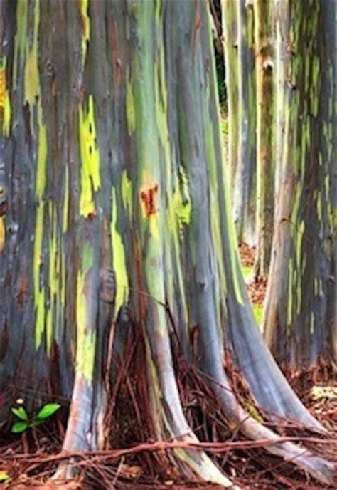 world s most amazing trees 5 of the world s most amazing trees ecowatch