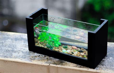 Air Gelembung Aquarium Satu Lubang jenis ikan hias air tawar tercantik dan paling diminati kuya hejo