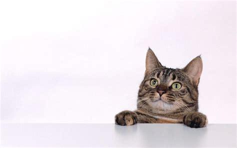 cat wallpaper graphic 猫の壁紙でデスクトップに癒しと安らぎを 猫の壁紙 猫画像22選