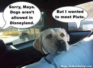 New Dog Meme - new funny dog memes american dog blog