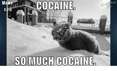 Cat Cocaine Meme - 25 best memes about cocaine cat cocaine cat memes