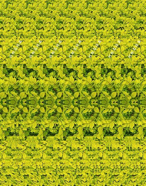 How To Find Pictures Of On The 3d Photograph Giraffe Can You See It Magic Eye Illusions This